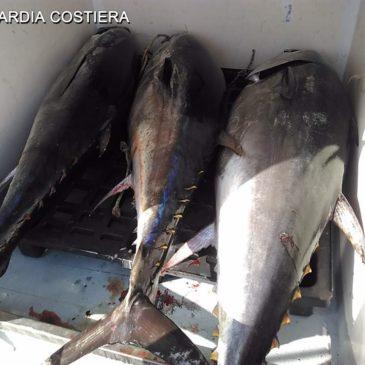 Golfo di Gaeta: a bordo con 3 tonni rossi da 200kg totali. Sequestro e 8000€ di sanzione