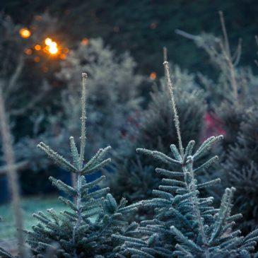 Natale 2017 a Gaeta: IL Bosco Incantato con eventi e degustazioni