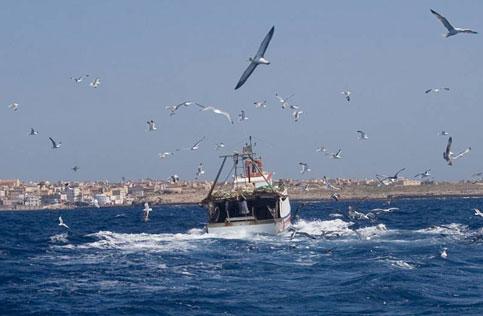 E' scattato il fermo pesca: rischio pesce straniero o congelato anche a Gaeta