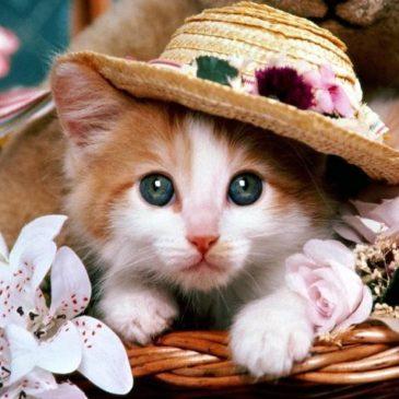 Comune di Gaeta: colonie feline e sterilizzazione gratuita