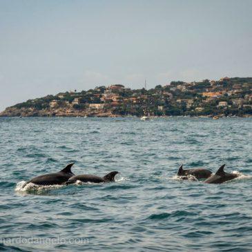 Delfini a Gaeta: Una bellissima Foto di 4 Delfini avvistati a Gaeta