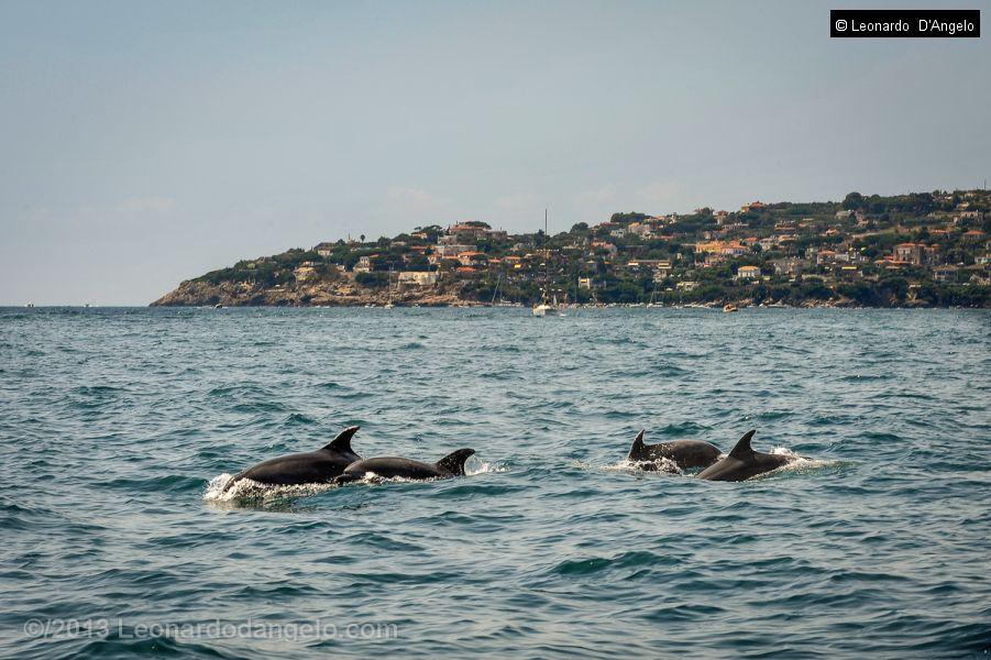 Delfini a Gaeta