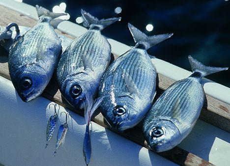 Economia del Mare: parte dal Lazio la procedura telematica per l'accesso al Registro Imprese della Pesca