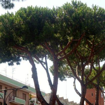 Gaeta: chiusi i Giardinetti di Piazza XIX Maggio causa caduta pigne