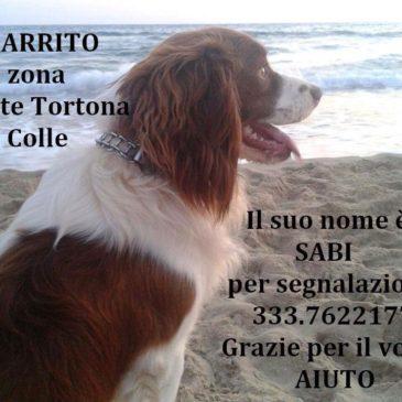 Gaeta: smarrito un cane zona MonteTortona Colle
