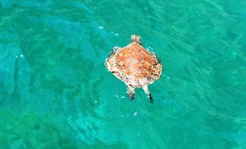 *VIDEO* Gaeta: recuperata dalla Guardia Costiera una Tartaruga Caretta Caretta