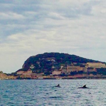 *Foto* Delfini a Gaeta: la meta ambita del Tirreno dai mammiferi del mare