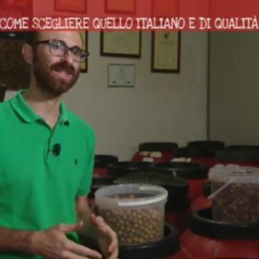 Olio di Oliva: Come scegliere quello italiano e di qualità