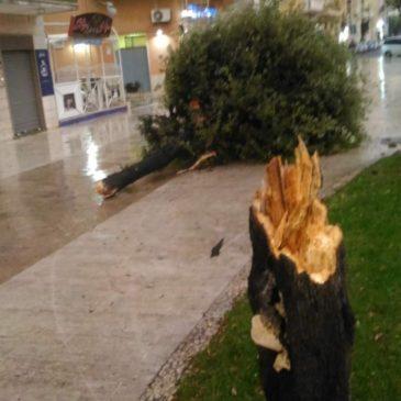 Gaeta: i danni del maltempo di oggi 29 ottobre, si invitano i cittadini a restare a casa