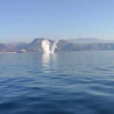 GAETA : fatte esplodere in mare 15 mine anticarro