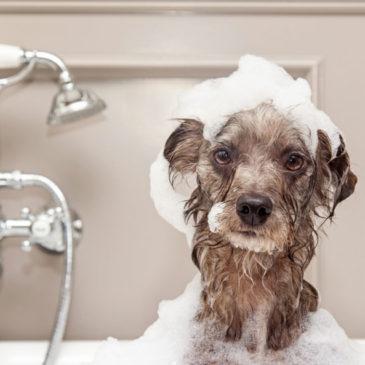 Regione Lazio: Dal 4 maggio aperte le toelettature per animali domestici